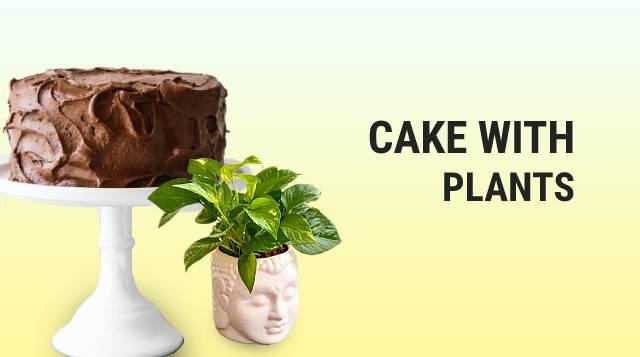Cake N Plants